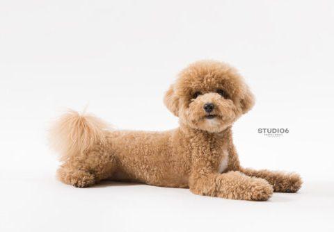 犬の等身大フォトプラン