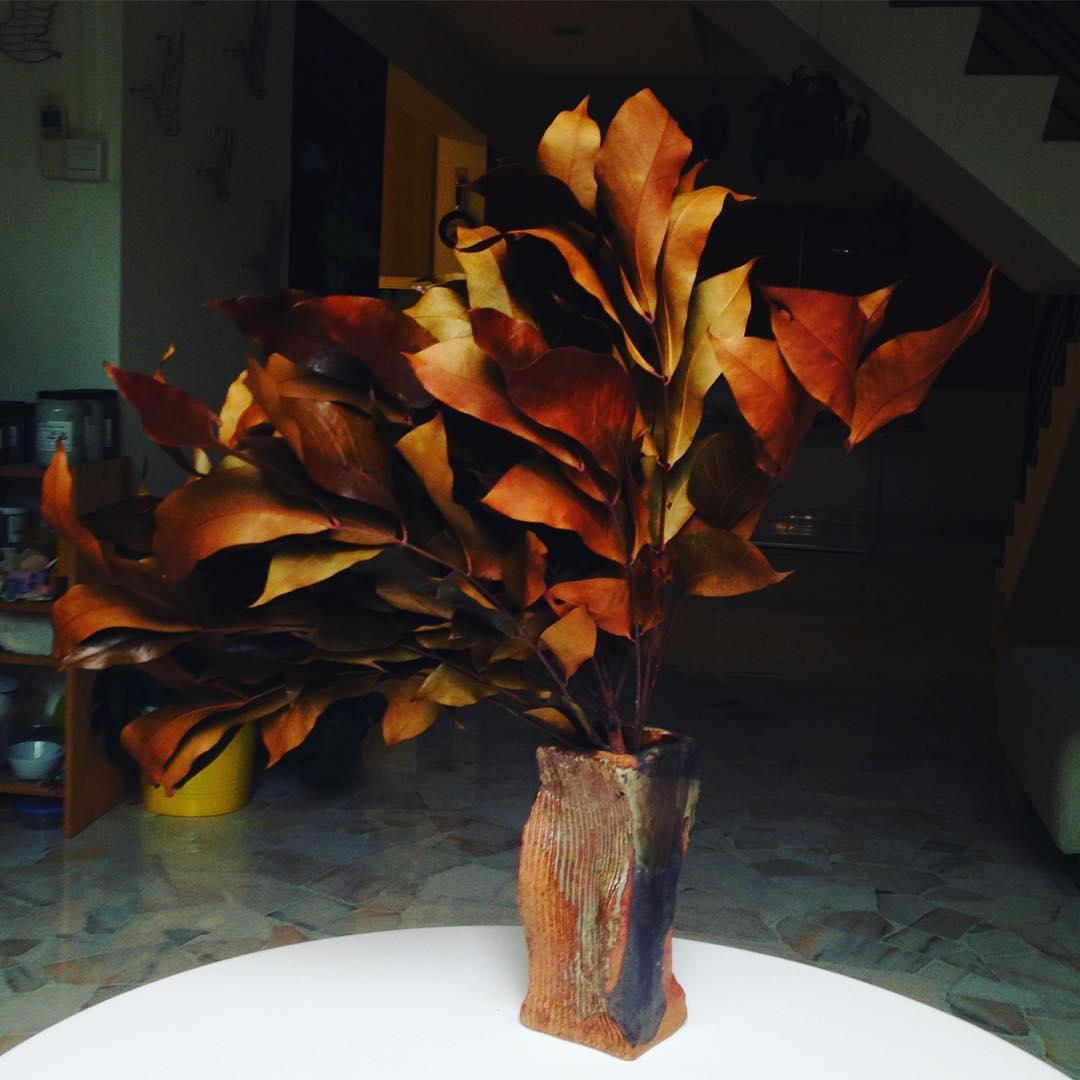 夕阳无限好,只是近黃昏  #fallen #leaves by the roadside #nature in #Singapore #studioasobi #handmade #ceramic #vases #wabisabi