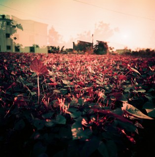 Lomochrome Purple, Toomore Chiang, Source: Flickr, Creative Commons https://www.flickr.com/photos/toomore/27337299012