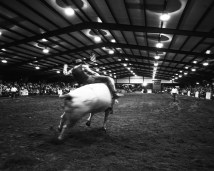 Kevin-Terrell-Rodeo-4