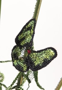 StudioDeanna_ButterflyRainforest10
