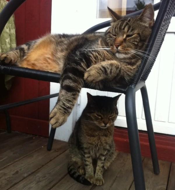 Katterna Albert och Mischka.
