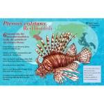 red lionfish scientific illustration poster