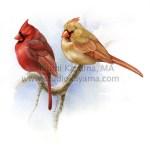 Male and female northern cardinals, Cardinalis cardinalis