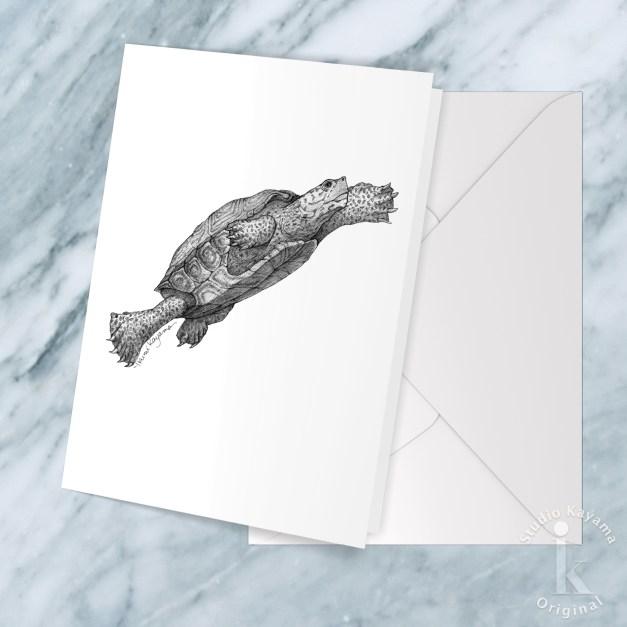 terrapin greeting cards blank inside