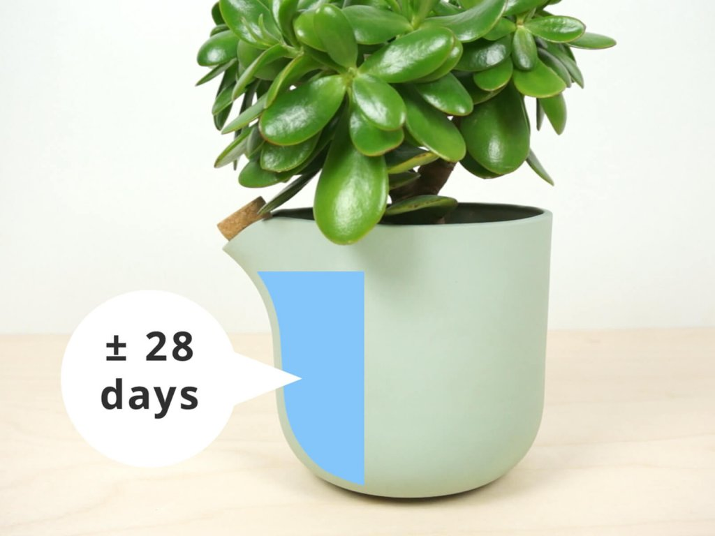 c12-natural-balance-feed-up-top-30-days