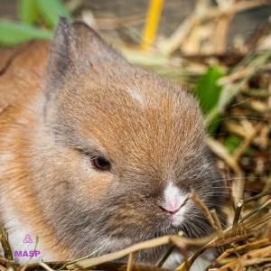 ritratto con coniglio