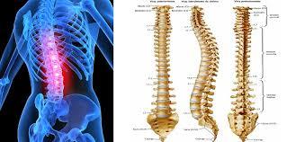 OSTEOPATIA BIODINAMICA E SPINA DORSALE