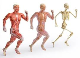 scheletro-corpo