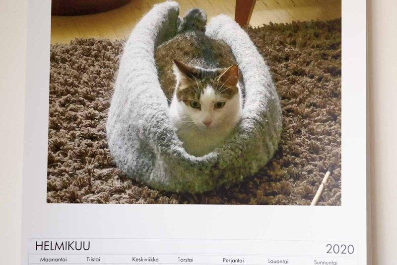 cat box Helmiluu