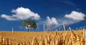 Bando-Insediamento-giovani-in-agricoltura-studiorussogiuseppe