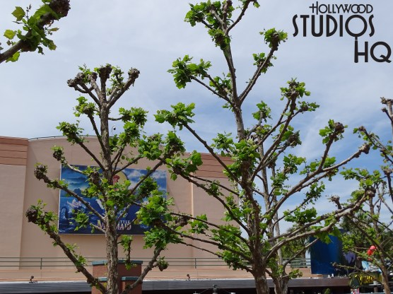 The trees to the right of the Chinese Theatre has started to bloom leaves. Disney's Hollywood Studios. Photo by John Capos