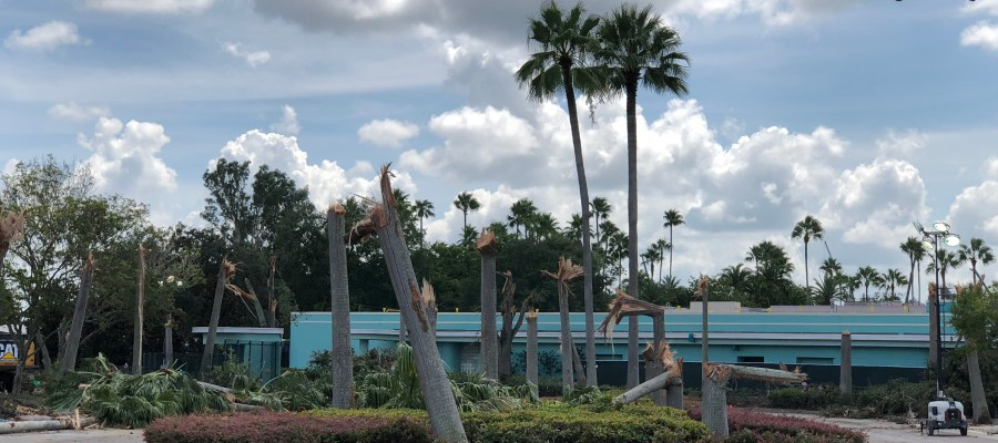 Tree removal efforts are underway in the original guest tram arrival and departure area. This renovation is part of the overall plan to redesign the Park's main entrance. Continue to check back frequently for the latest updates and photos of this project at Hollywood Studios HQ. Disney's Hollywood Studios. Photo by John Capos