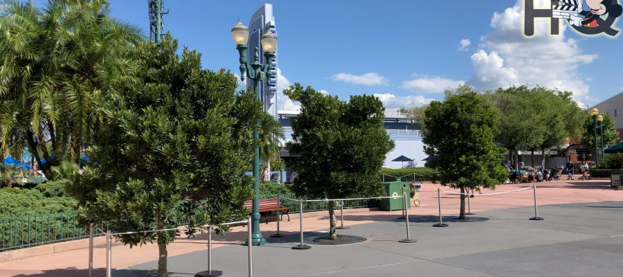 Guests will notice new foliage on the left of Center Stage thanks to three new trees planted by workers. Stay connected to Hollywood Studios HQ for all Park enhancement updates. Disney's Hollywood Studios. Photo by John Capos