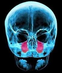 Poliposi nasale Endoscopia nasale Sinusite Ipertrofia Turbinati Decongestione dei Turbinati Deviazione Settale Patologia Nasale 04