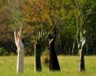 Ana Flores, Sacred Grove/ Outdoor installation