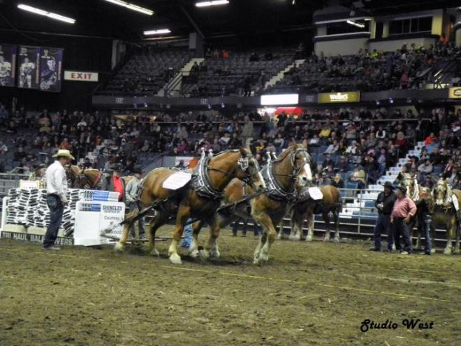 Agribition 5