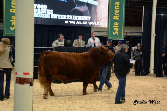Agribition 7