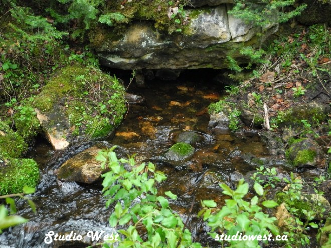 Stream with vegetation DSCN6138