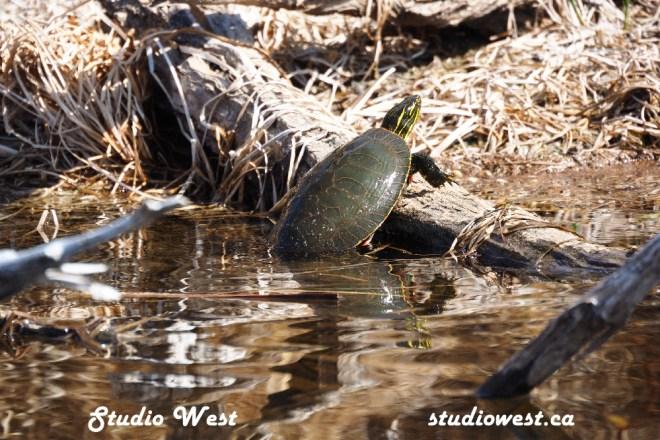 Turtle Pike Lake