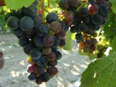 patria - studio wina - sierpień 2015