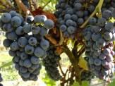 patria-winobranie-studio wina