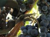 patria-winobranie-©studio wina