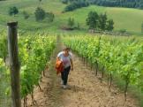 Winnica Jakubów - panorama