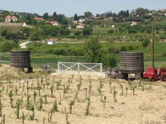 SODAP winiarnia