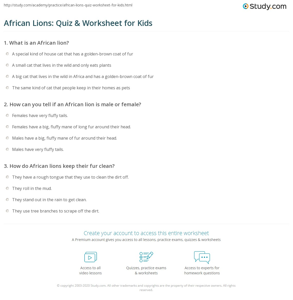 African Lions Quiz Amp Worksheet For Kids
