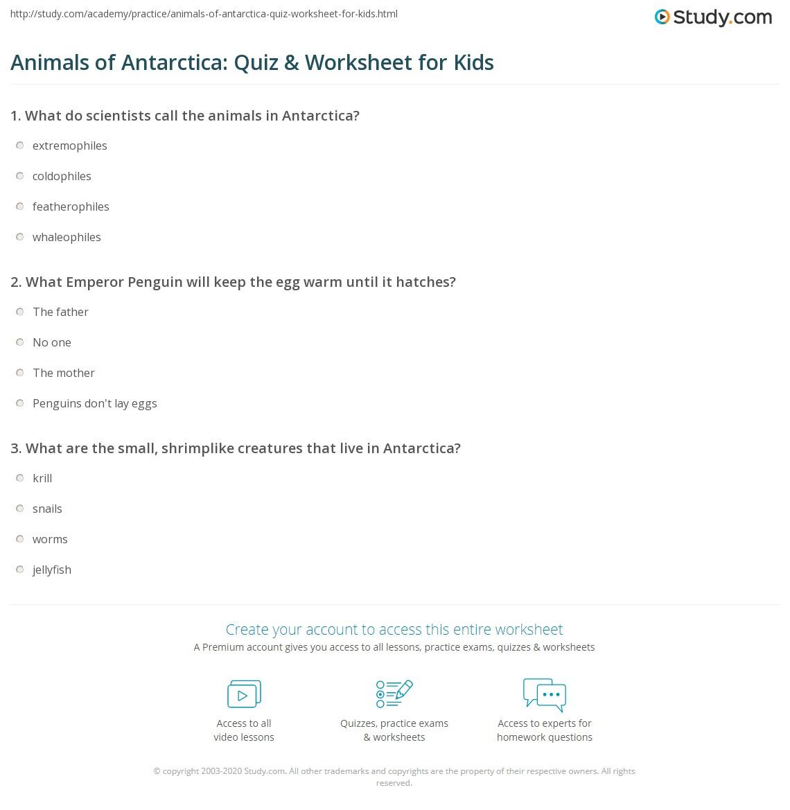 Animals Of Antarctica Quiz Amp Worksheet For Kids