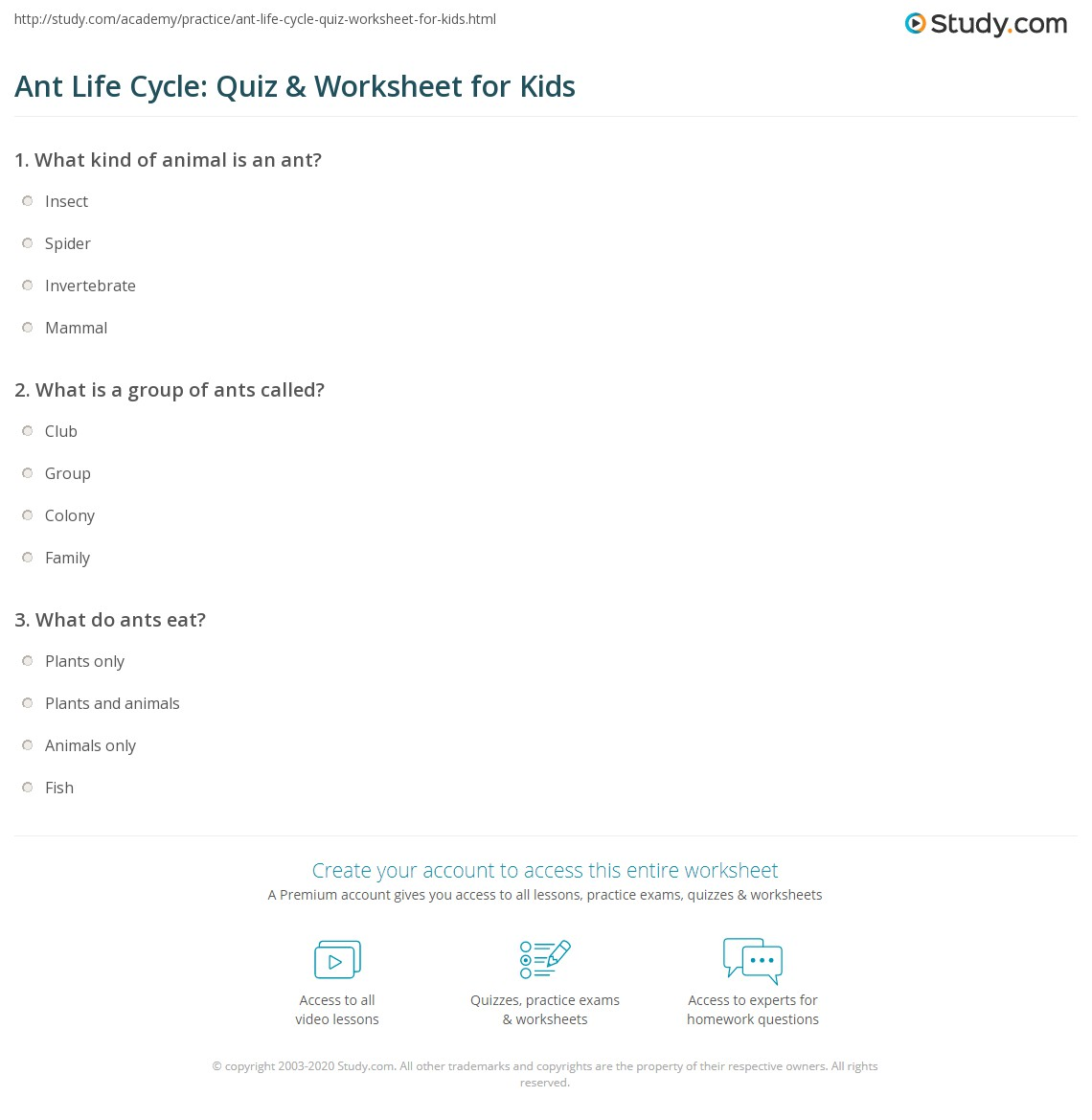 Ant Life Cycle Quiz Amp Worksheet For Kids