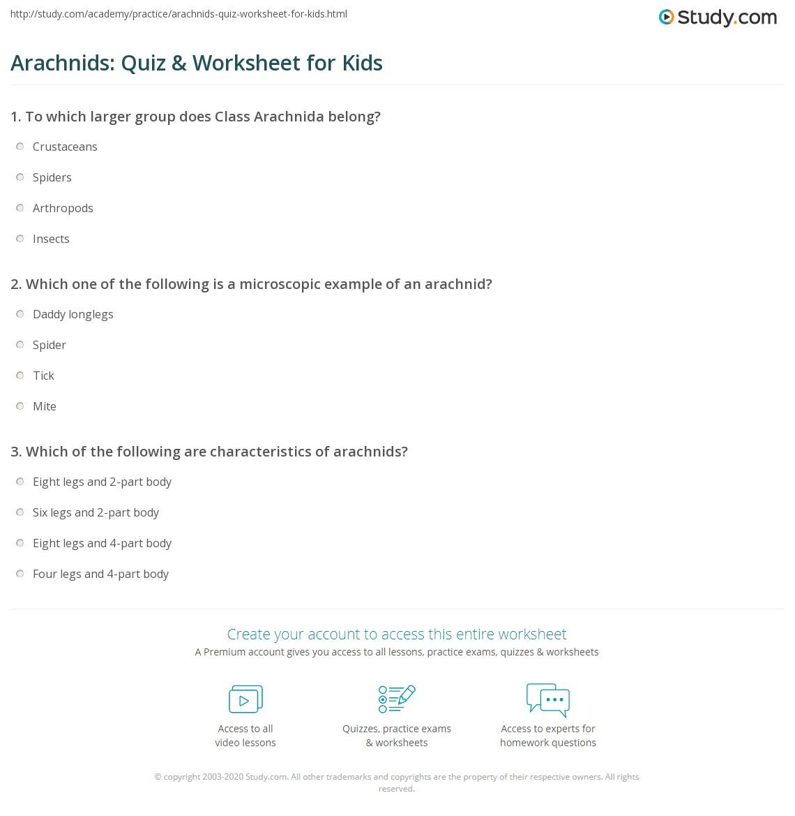 Arachnids Quiz Amp Worksheet For Kids