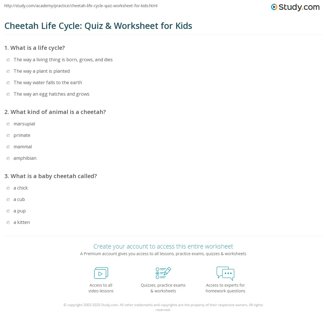 Cheetah Life Cycle Quiz Amp Worksheet For Kids