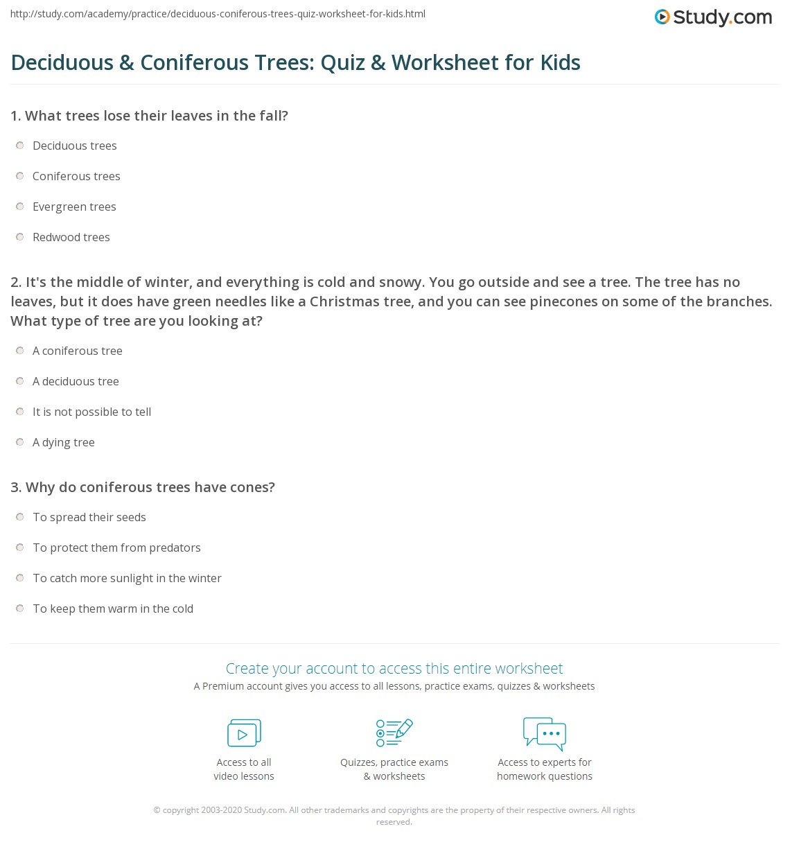 Deciduous Amp Coniferous Trees Quiz Amp Worksheet For Kids