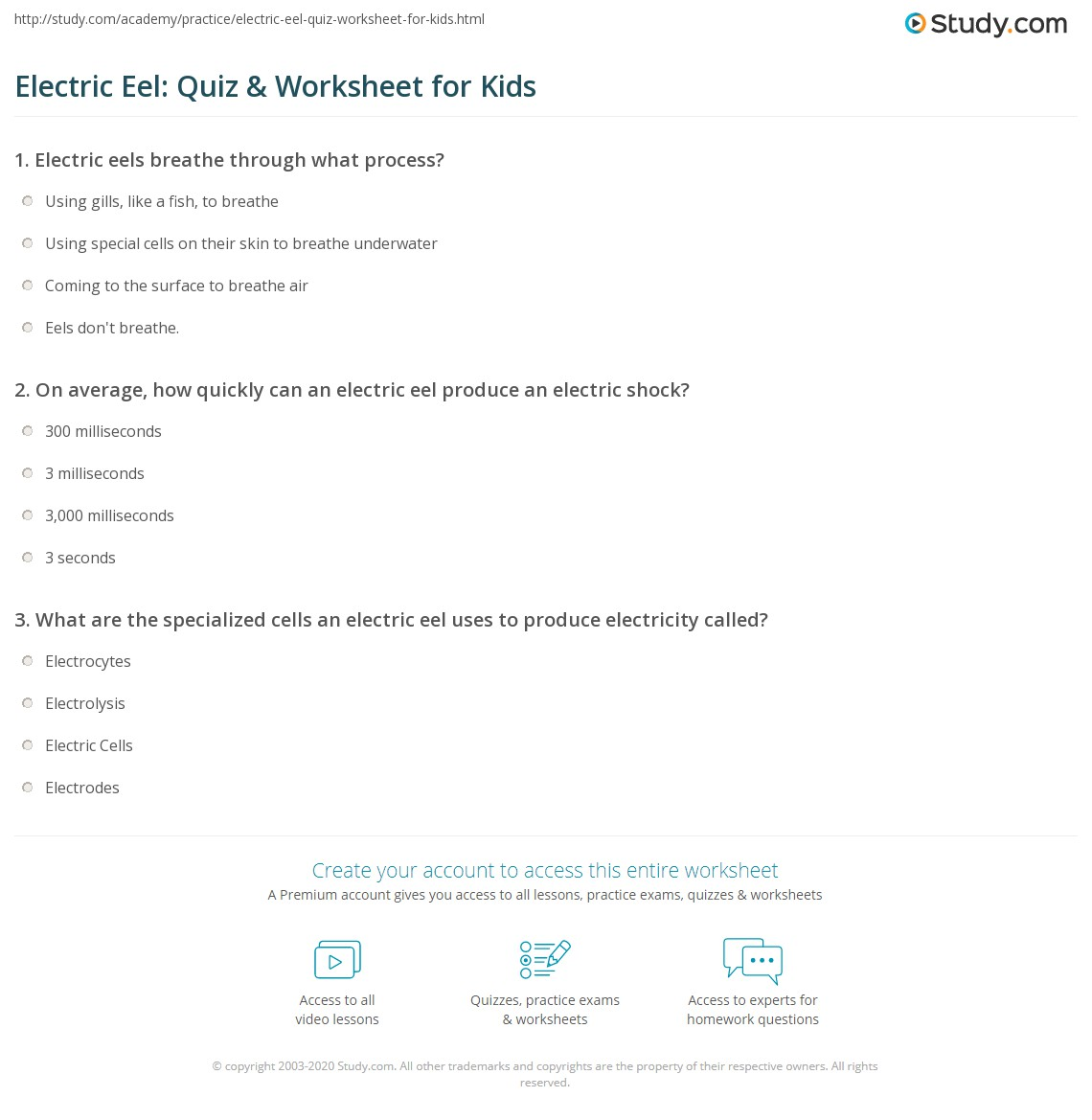 Electric Eel Quiz Amp Worksheet For Kids