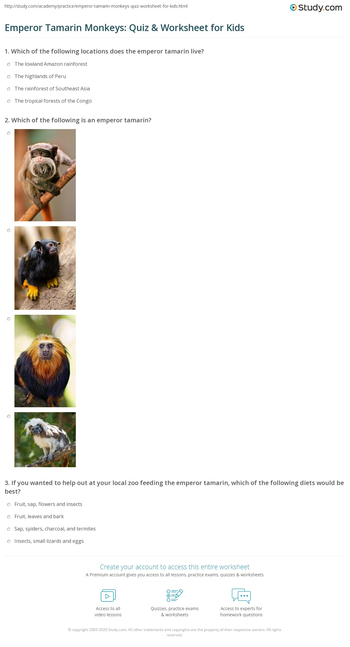 Emperor Tamarin Monkeys Quiz Amp Worksheet For Kids