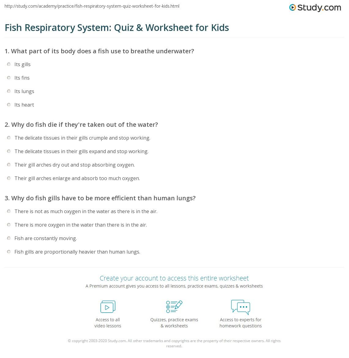 Fish Respiratory System Quiz Amp Worksheet For Kids