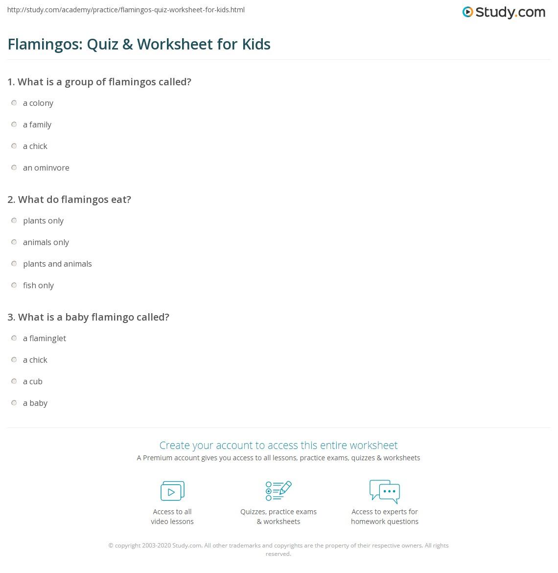 Flamingos Quiz Amp Worksheet For Kids