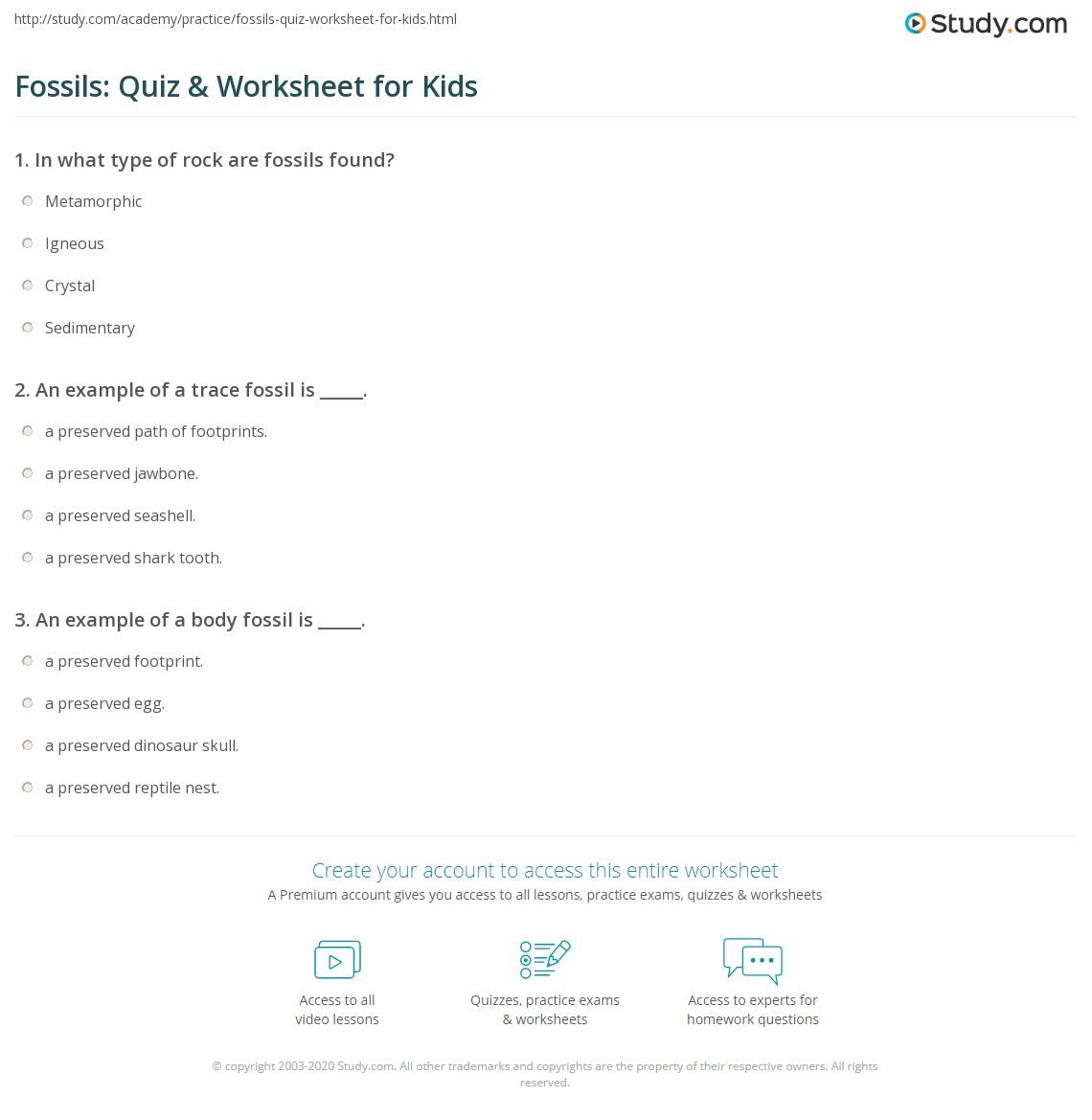 Fossils Quiz Amp Worksheet For Kids