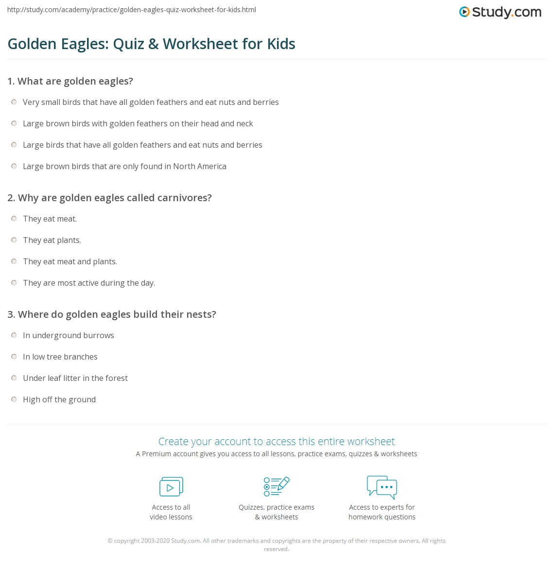 Golden Eagles Quiz Amp Worksheet For Kids