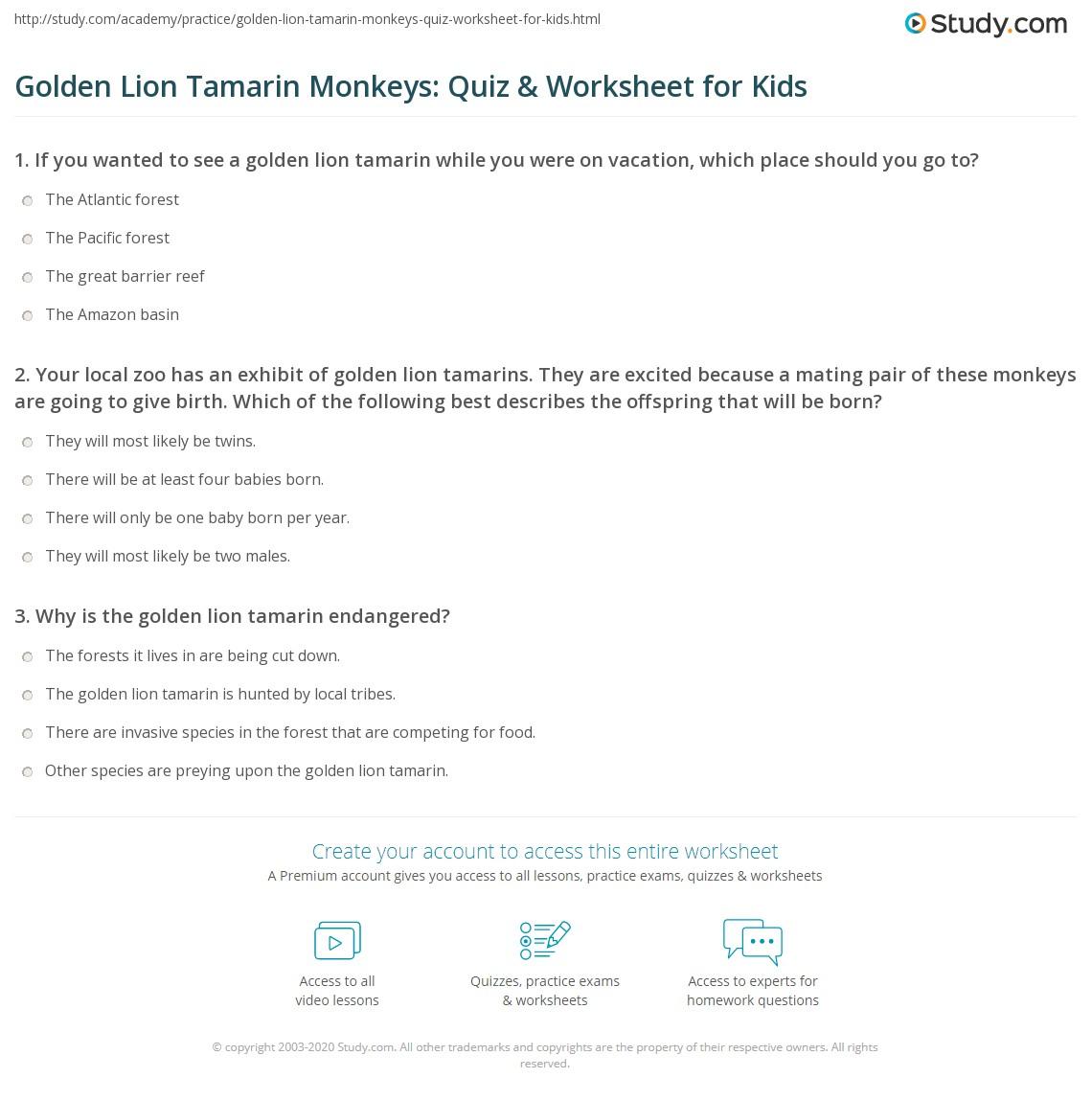Golden Lion Tamarin Monkeys Quiz Amp Worksheet For Kids