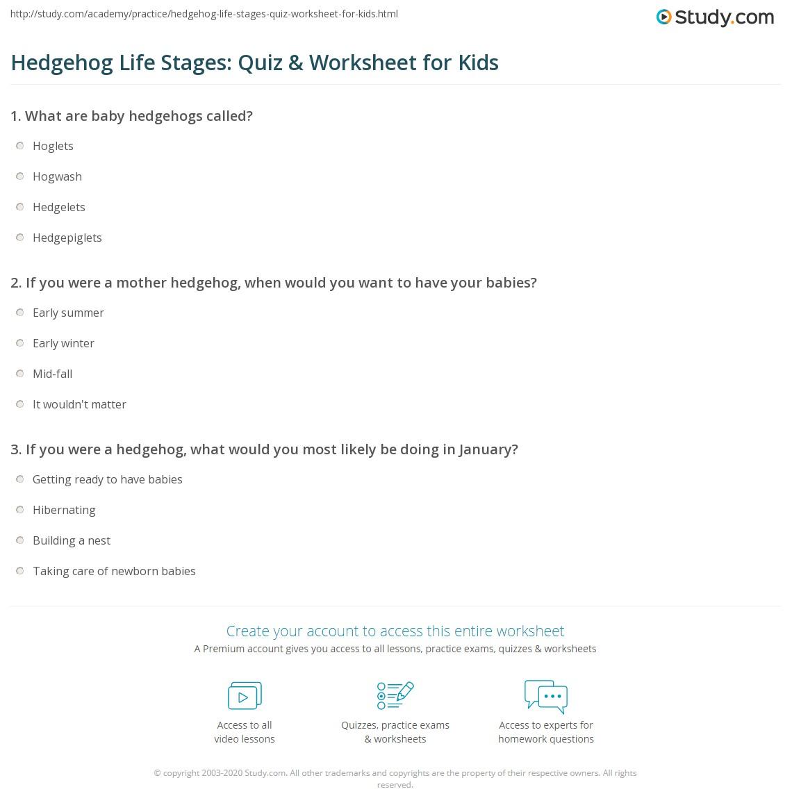 Hedgehog Life Stages Quiz Amp Worksheet For Kids
