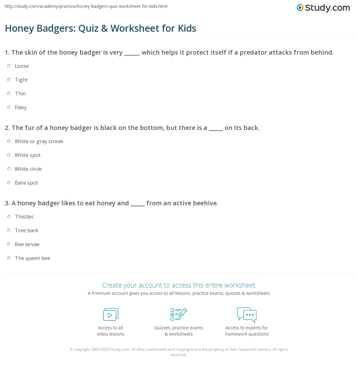 Honey Badgers Quiz Amp Worksheet For Kids