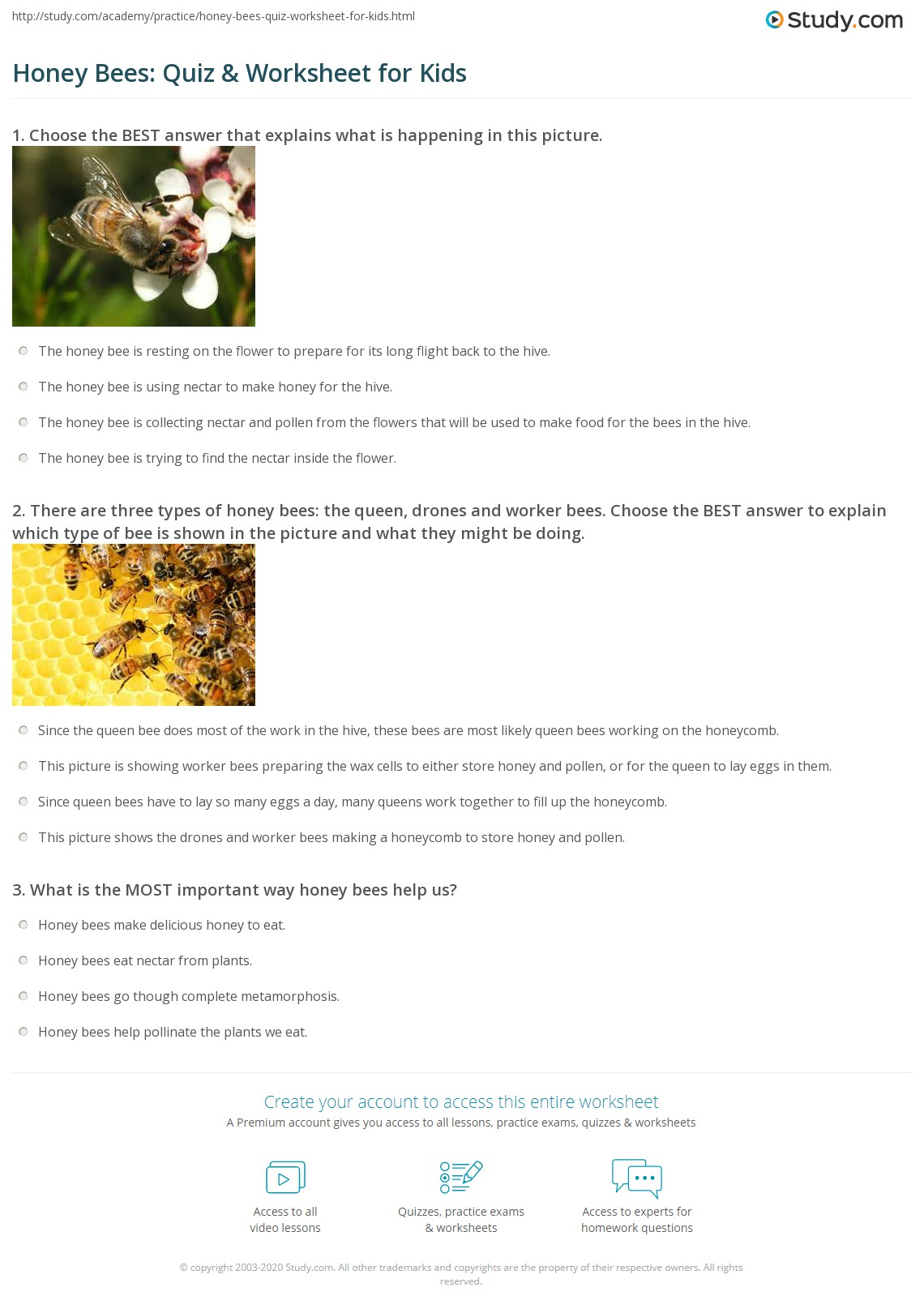 Honey Bees Quiz Amp Worksheet For Kids