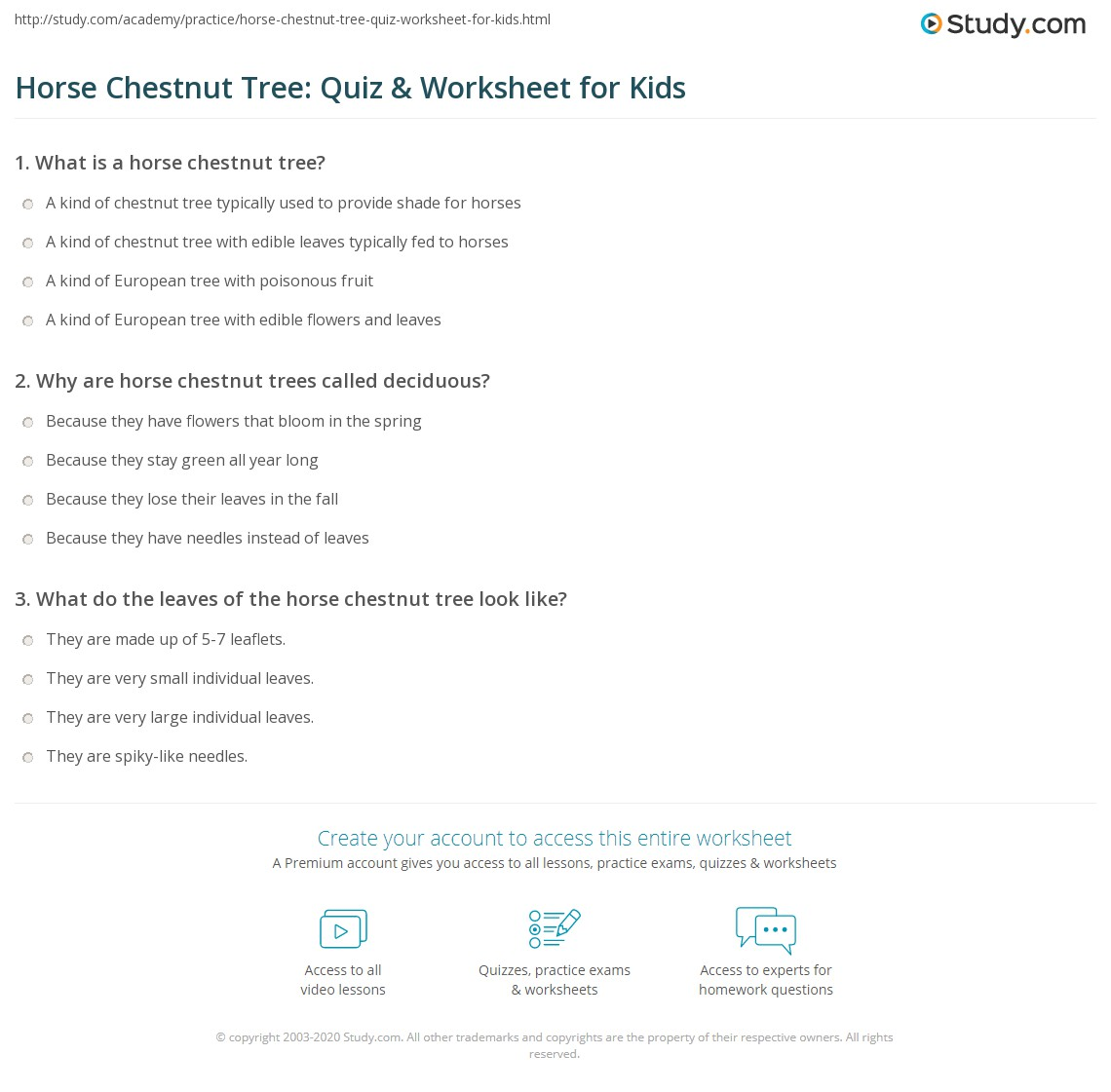 Horse Chestnut Tree Quiz Amp Worksheet For Kids