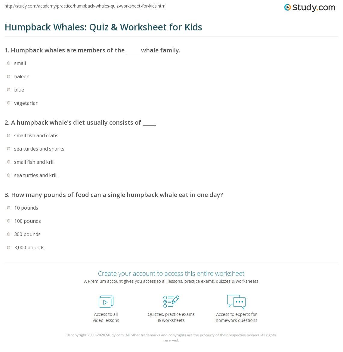 Humpback Whales Quiz Amp Worksheet For Kids