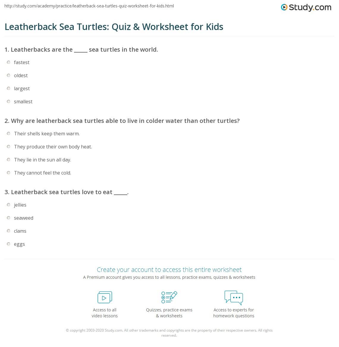 Leatherback Sea Turtles Quiz Amp Worksheet For Kids