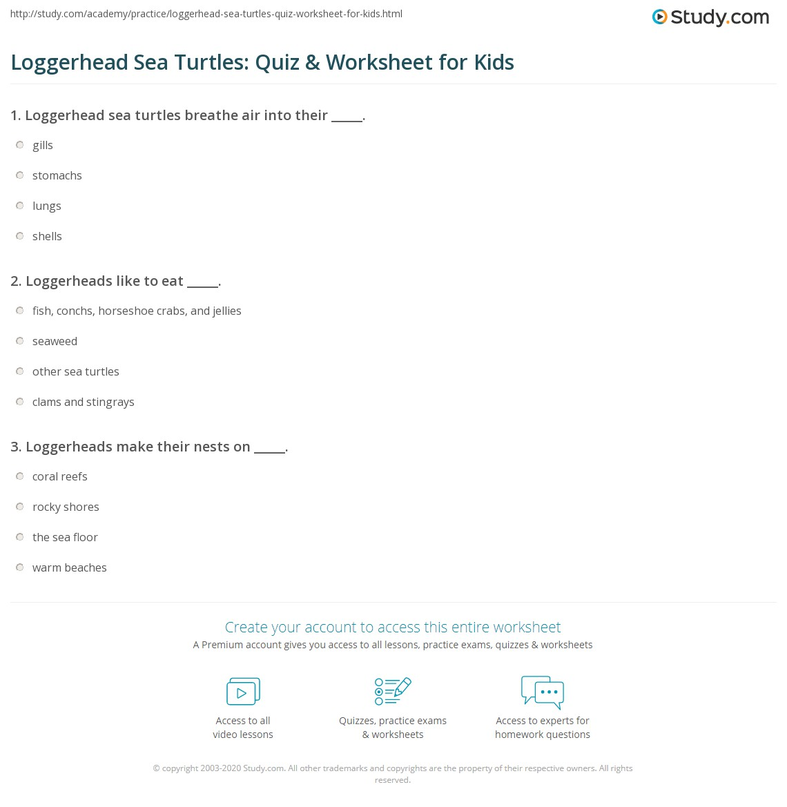 Loggerhead Sea Turtles Quiz Amp Worksheet For Kids