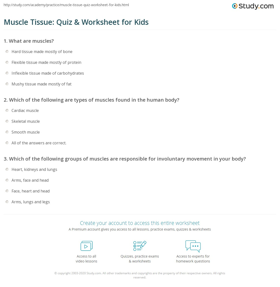 Muscle Tissue Quiz Amp Worksheet For Kids